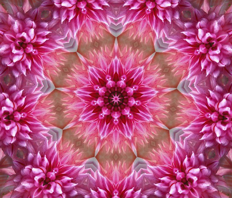 flower-peyodotart